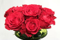 Bouquet of roses in a green vase, red flowers Royalty Free Stock Photos