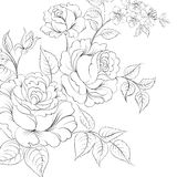 Bouquet of roses iolated on white background. Stock Images