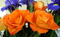 Bouquet of Roses and Iris Orange and Blue Theme Royalty Free Stock Image