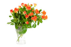 Bouquet of roses isolated on white background. Stock Photography