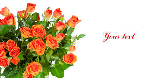 Bouquet of roses isolated on white background. Stock Image