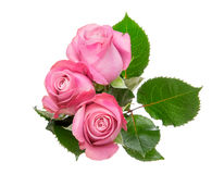 Bouquet of roses with leaves royalty free stock photos