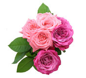 Bouquet of roses with leaves Royalty Free Stock Photo
