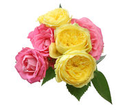 Bouquet of roses with leaves Stock Photos