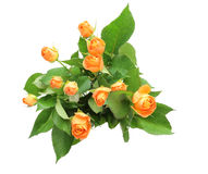 Bouquet of roses with leaves Stock Images