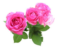 Bouquet of roses with leaves Stock Image