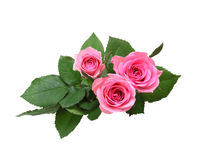 Bouquet of roses with leaves Royalty Free Stock Images
