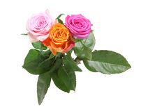 Bouquet of roses with leaves Royalty Free Stock Image