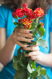 Bouquet of roses with long stems in female hands Royalty Free Stock Photos