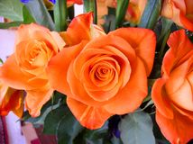 Bouquet of Roses Orange Swirl Royalty Free Stock Photo