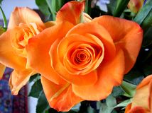 Bouquet of Roses Orange Swirl. With suggestions of fire, citrus and glowing sunsets, orange roses make the perfect summertime bloom. Unique and vibrant, these Stock Photo