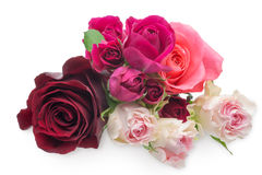 The bouquet of roses Royalty Free Stock Photos