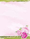 Bouquet of roses on pink background Royalty Free Stock Photos