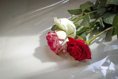 Bouquet of roses. Stock Photos
