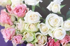 Bouquet of roses. Soft pastel colors Royalty Free Stock Images