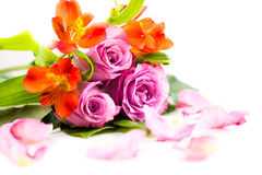 Bouquet of roses and some flower petals. Bouquet of roses  on white Stock Photo