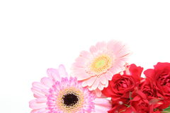 Bouquet of roses and transvaal daisy Stock Images