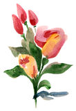 Bouquet of roses and tulips. Water colour painting Royalty Free Stock Photo