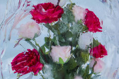 Bouquet of Roses Under Ice. Bouquet of roses covered with ice Stock Photo