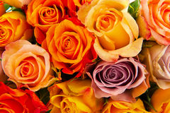 Bouquet roses in various colors. Colorful bouquet rosesto use as a background Royalty Free Stock Images