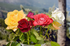 Bouquet of roses of various colors. With landscape background Stock Image