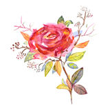 Bouquet of roses, watercolor, can be used as greeting card, invitation card for wedding, birthday and other holiday and summer bac Stock Photography