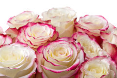 Bouquet of roses on white background. Bouquet of white roses with red edges of the petals stock photo