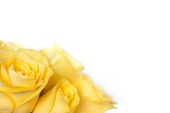Bouquet of yellow roses Royalty Free Stock Photos