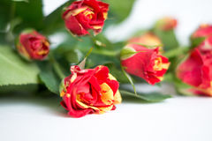 Bouquet of  roses on a white background. Bouquet red and yellow roses on a white background Stock Photos
