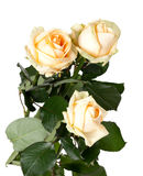 Bouquet of roses on white. Bouquet of roses isolated on white background Royalty Free Stock Images