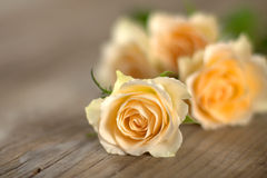 Bouquet of roses on wooden boards Stock Photography
