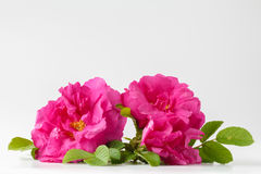 Bouquet of roses on wooden table Stock Photography