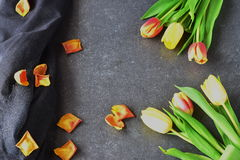 Bouquet of rosy and yellow tulips on a black abstract background, with dry petals. Space for text. Romance concept. Royalty Free Stock Image