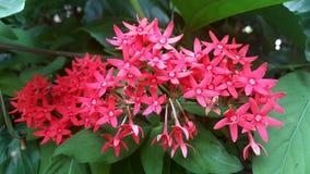 Bouquet rouge Photo stock