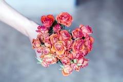 Bouquet rouge des roses de floraison dans la main de l'homme Photographie stock libre de droits
