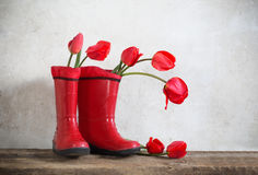 Bouquet  in rubber boots Stock Photos