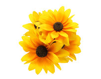 Bouquet of Rudbeckia Royalty Free Stock Image