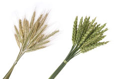 Bouquet of rye and wheat Royalty Free Stock Photos