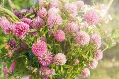 Bouquet sauvage de fleur rose de trèfle sur l'herbe verte dans le doux Image libre de droits