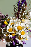 Bouquet sauvage de marguerites Photo libre de droits