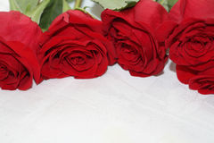 Bouquet of scarlet roses Stock Photos