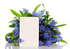 Bouquet of scilla and the empty card Stock Images