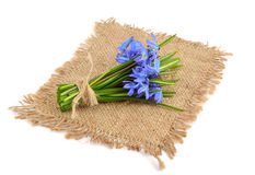 Bouquet from scilla. Royalty Free Stock Image