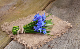Bouquet from scilla Stock Photo