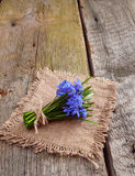 Bouquet from scilla Royalty Free Stock Images