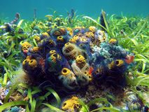 Bouquet of sea sponges Stock Images
