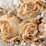 Bouquet sec Photo stock