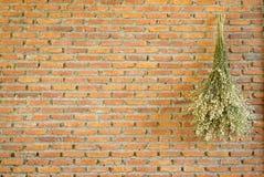 Bouquet sec accrochant sur le fond de mur de briques Images libres de droits