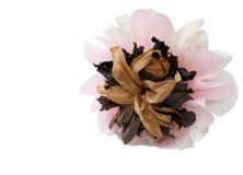 Bouquet sec d'isolement Photographie stock libre de droits