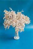 Bouquet sec de fleur Photographie stock